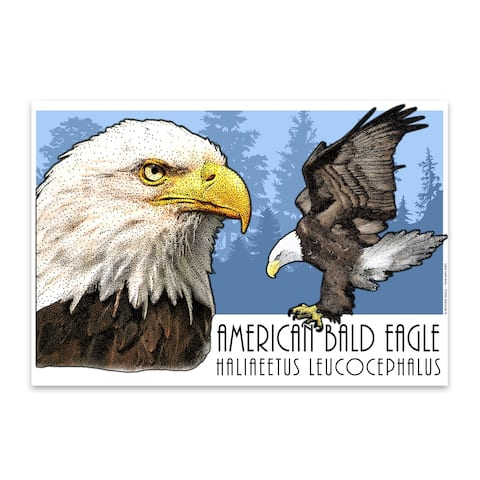 Noir Gallery Bald Eagle Animal Illustration Metal Wall Art Print