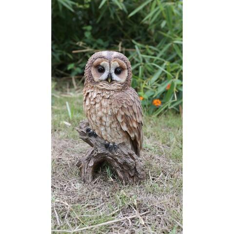 Brown Owl On Stump