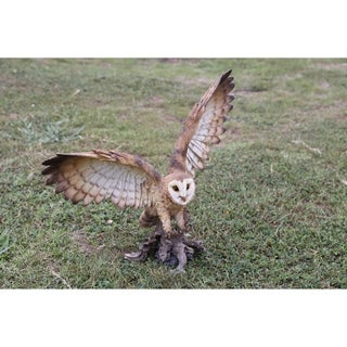 Barn Owl On Stump with Open Wings