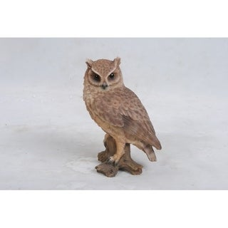 Small Screech Owl On Stump