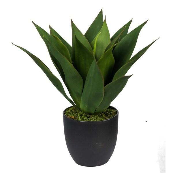 Dark Green 15-inch Potted Aloe
