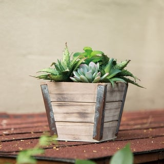 "Glitzhome 7.5""H Artificial Succulent Plants in Wooden Box"