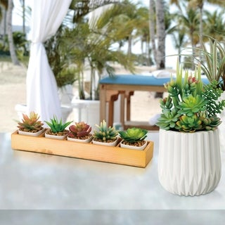 "Glitzhome 5 Pieces 13.2""L Succulent Plants in Wooden Box"