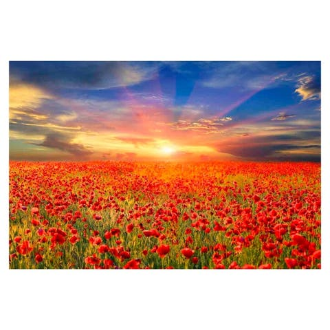 All the Poppies - Multi-Color