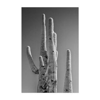 Noir Gallery Desert Cactus Nature Photography Unframed Art Print/Poster
