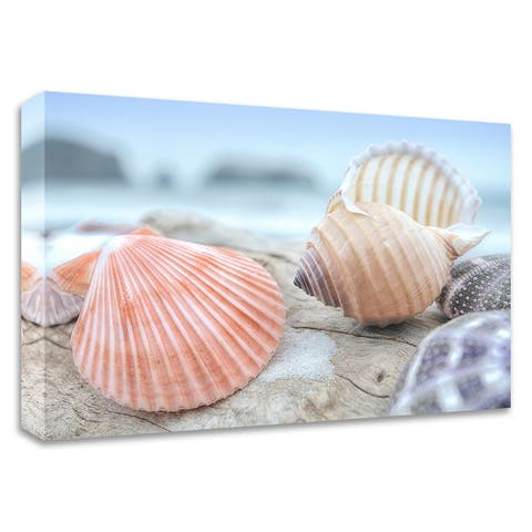 """""""Crescent Beach Shells 10"""" by Alan Blaustein, Print on Canvas, Ready to Hang"""