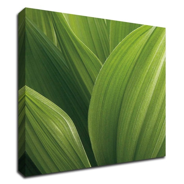 """Corn Lily"" by Jan Bell, Print on Canvas, Ready to Hang"