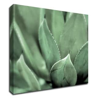 """Agave 4"" by Alan Blaustein, Print on Canvas, Ready to Hang"