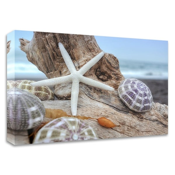 """""""Crescent Beach Shells 7"""" by Alan Blaustein, Print on Canvas, Ready to Hang"""