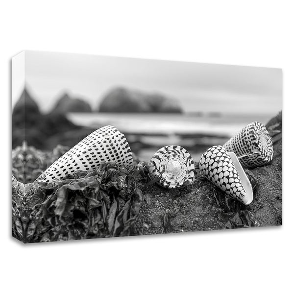 """""""Crescent Beach Shells 3"""" by Alan Blaustein, Print on Canvas, Ready to Hang"""