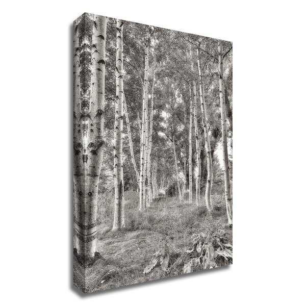 """""""Birch Trees No.3"""" by Alan Blaustein, Print on Canvas, Ready to Hang"""