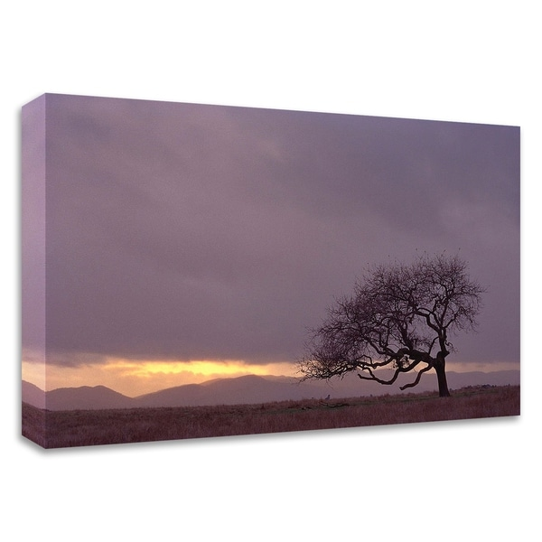 """""""Field"""" by PhotoINC Studio, Print on Canvas, Ready to Hang"""