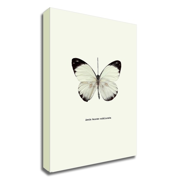 """""""White Butterfly"""" by GraphINC, Print on Canvas, Ready to Hang"""