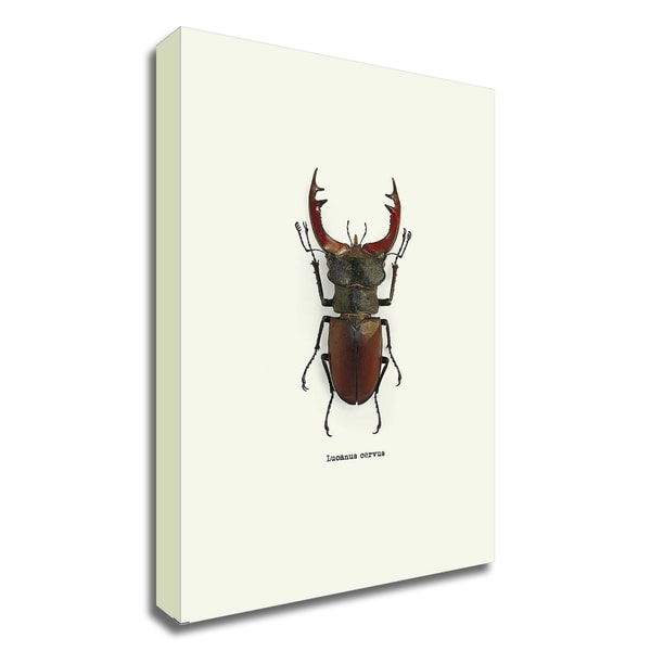 """Beetle Red"" by GraphINC, Print on Canvas, Ready to Hang"