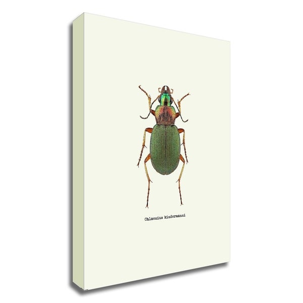 """Beetle Green"" by GraphINC, Print on Canvas, Ready to Hang"