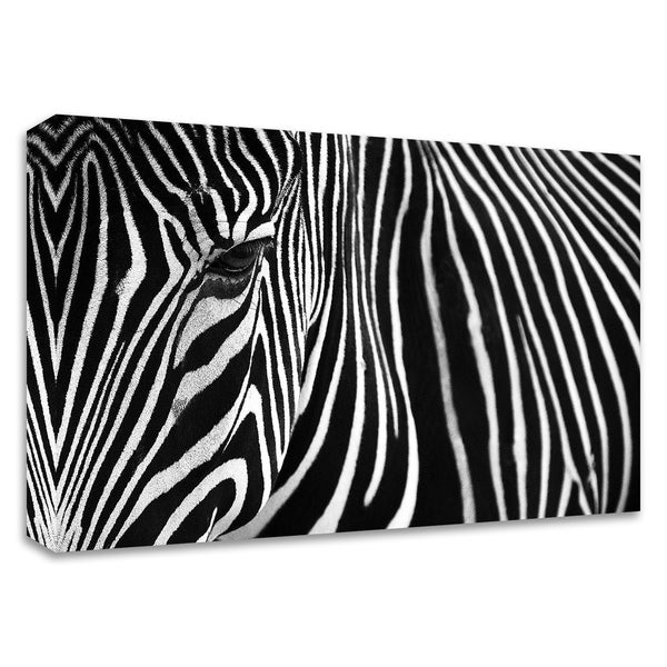 """""""Zebra in Lisbon Zoo"""" by Andy Mumford, Print on Canvas, Ready to Hang"""