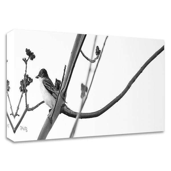 """Kingbird"" by Matthew Platz, Print on Canvas, Ready to Hang"