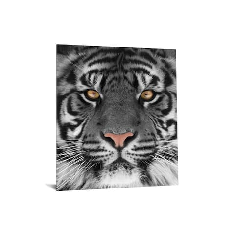 """40x60 Brilliant Tempered """"Glass Eye of the Tiger"""" by Classy Art"""