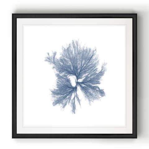 Navy Seaweed III -Black Framed Print