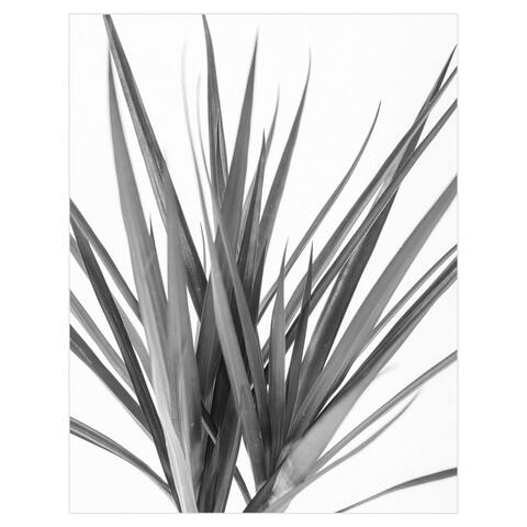 Dracaena Noir by Assaf Frank Canvas Art Print