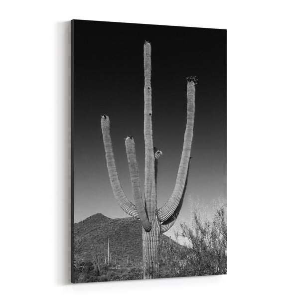 Noir Gallery Saguaro Arizona Cactus Desert Photo Canvas Wall Art Print