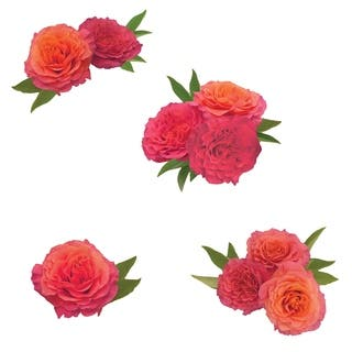 Sunset Rose Wall Art Kit