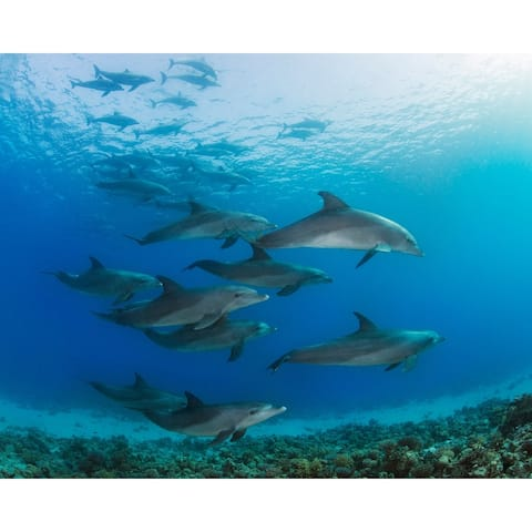 Underwater Dolphins Wall Mural