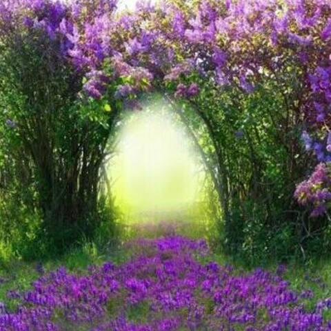 Photography Backdrop Studio Photo Prop 5' x 7' Purple Flowers