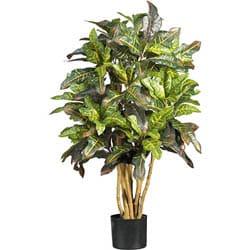 Silk Croton 3-foot Tree