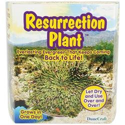 Dunecraft Fast Growing Plant Kit