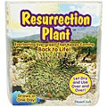 Dunecraft Fast Growing Plant Kit
