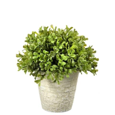 "Regency Spring Boxwood Dome Topiary 8"""