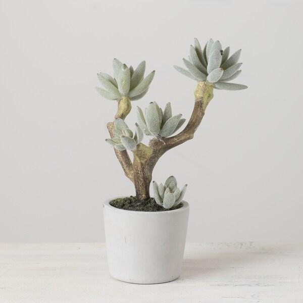 Succulent with Cement Pot