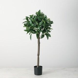 Bay Leaves Tree - Green