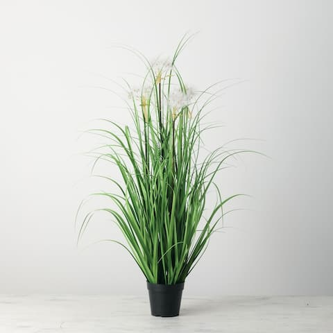 Onion Potted Grass - Green
