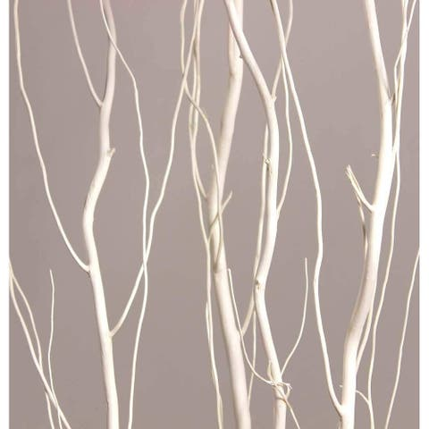 Tall Curly Willow - 4-5Ft Tall - Bleached White