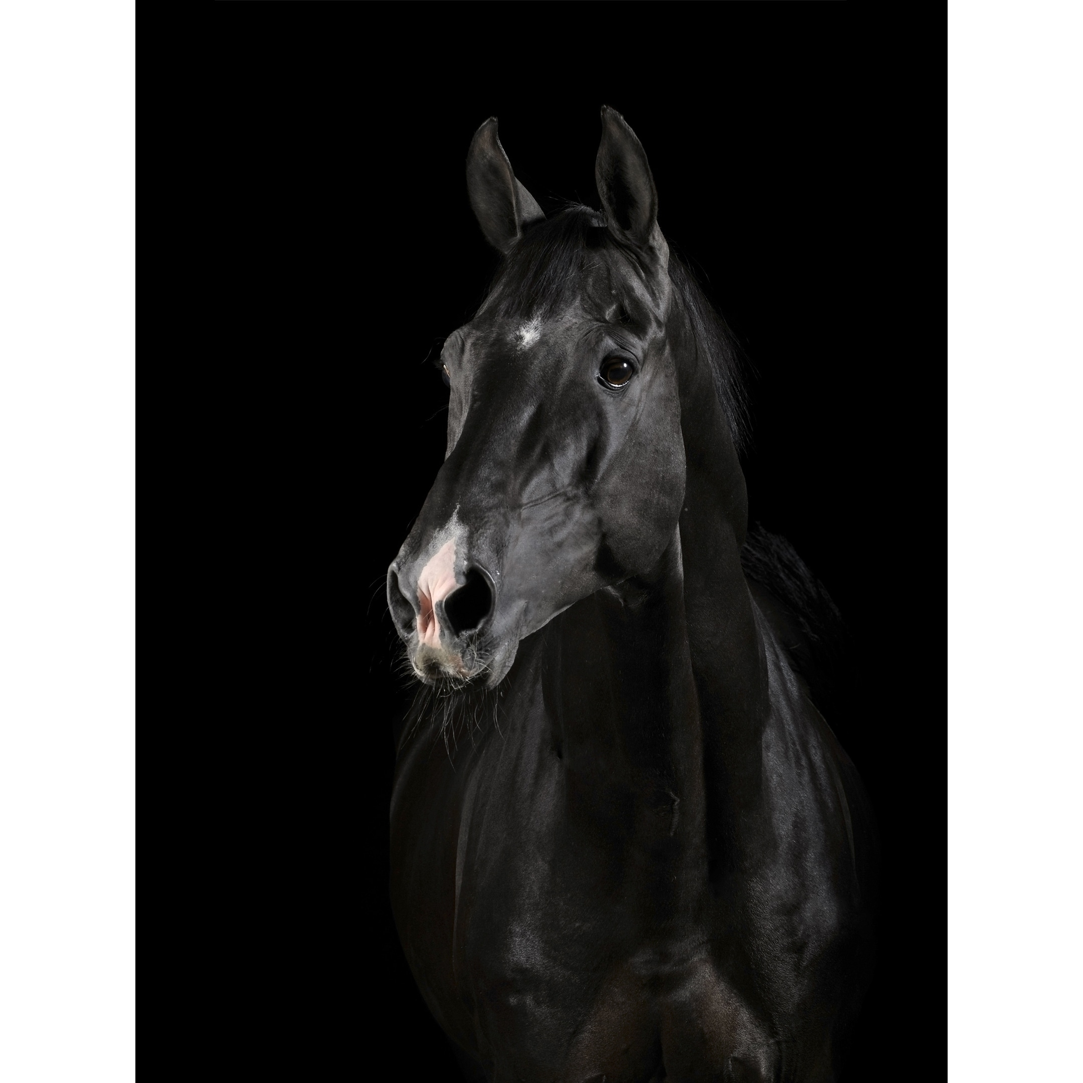 Black Horse Face Canvas Art Overstock 30218370
