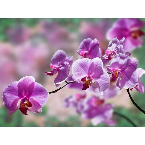 Purple Orchid Photography Canvas Art