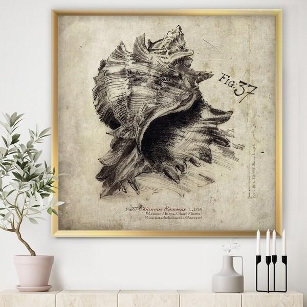 Designart 'Sea Shell Old Style Sketch I' Nautical & Coastal Framed Art Print