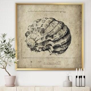 Designart 'Sea Shell Old Style Sketch III' Nautical & Coastal Premium Framed Art Print