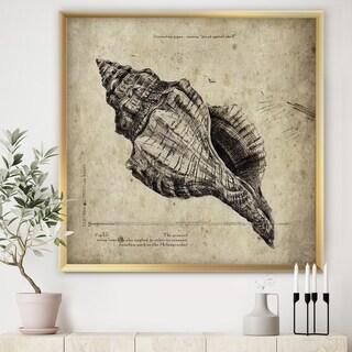 Designart 'Sea Shell Old Style Sketch II' Nautical & Coastal Framed Art Print