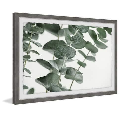 Handmade Silver Dollar Eucalyptus Framed Painting Print