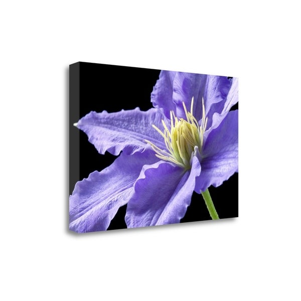 """""""Purple Clematis"""" By Amalia Elena Veralli, Giclee Print on Gallery Wrap Canvas"""