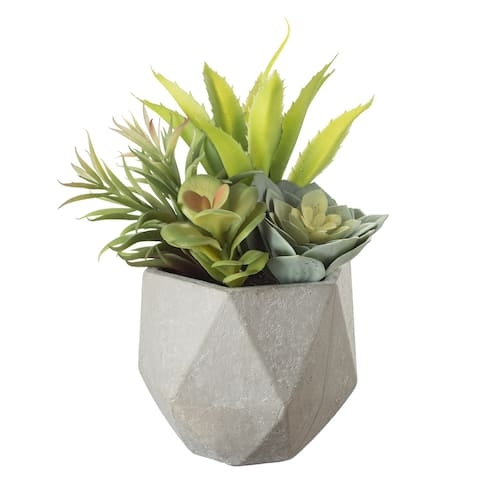 Echeveria and Aloe Potted Plant - Green