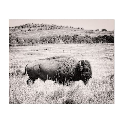 Noir Gallery Animals Mountains Rural Buffalo Photo Unframed Art Print/Poster