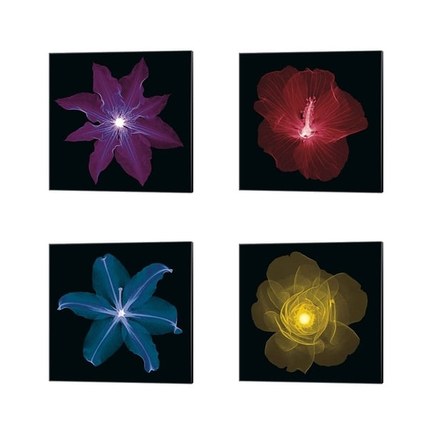 Jim Wehtje 'Clematis, Hibiscus, Lily & Rose' Canvas Art (Set of 4)
