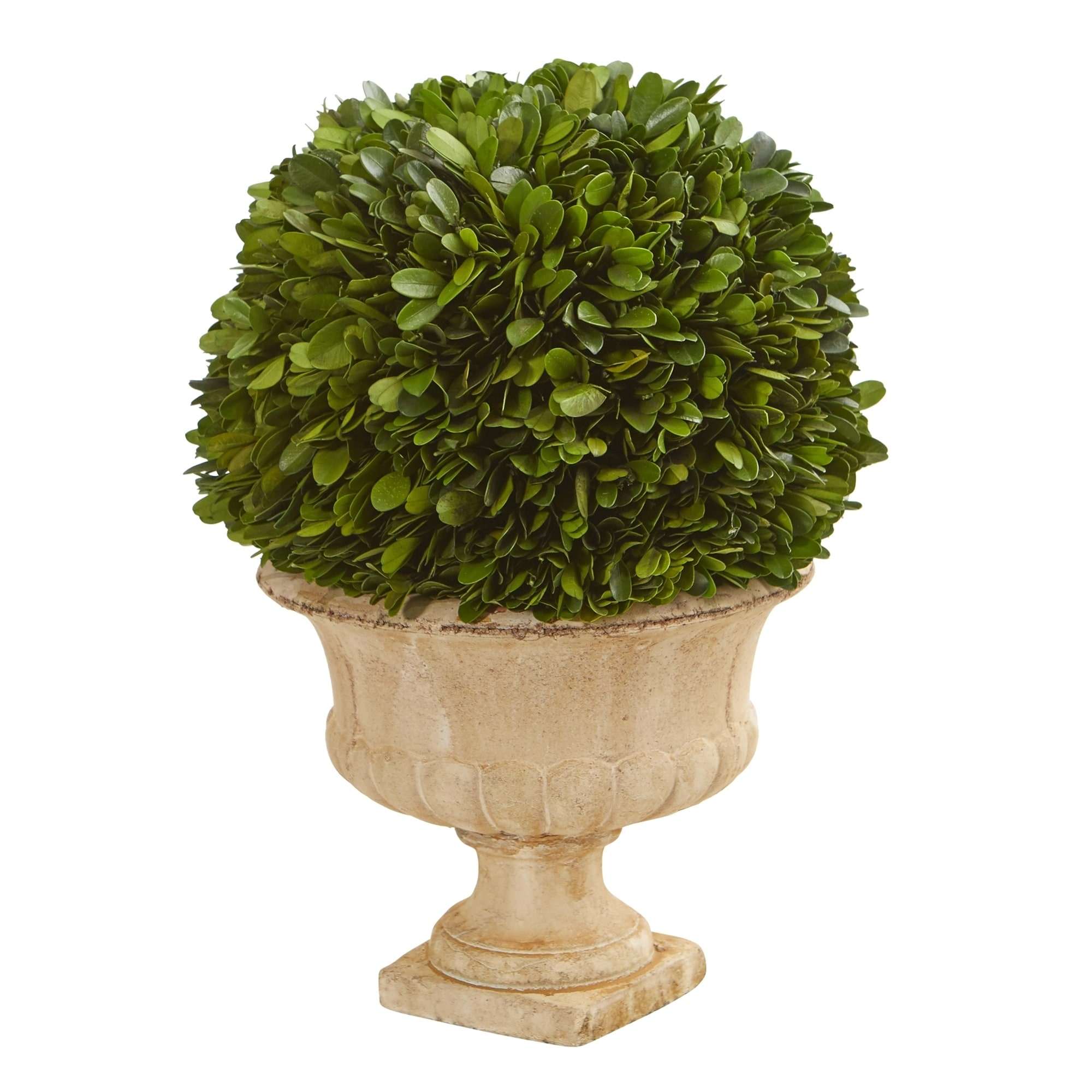 12 Boxwood Topiary Ball Preserved Plant In Decorative Urn Overstock 30638524