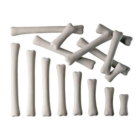 Yellow Door® Dinosaur Bones Match & Measure Set