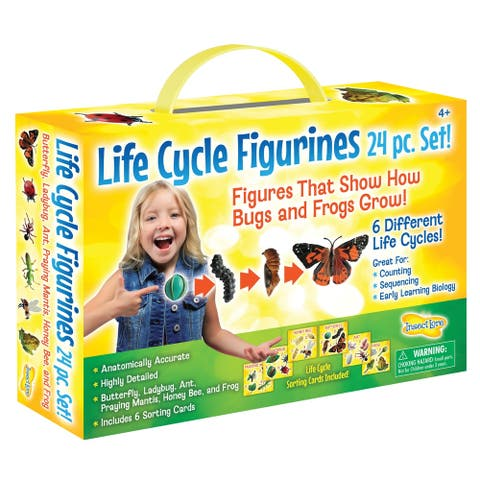 Insect Lore® Life Cycle Figurines, 24 Piece Set