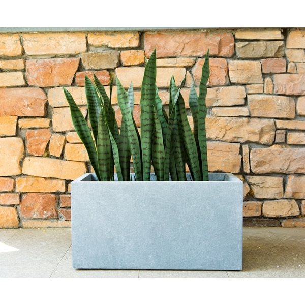 "SUCCULENT GARDEN IN GRAY CONCRETE PLANTER 5.5/"" MODERN"
